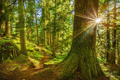trees trail sunstar oldmasonlaketrail