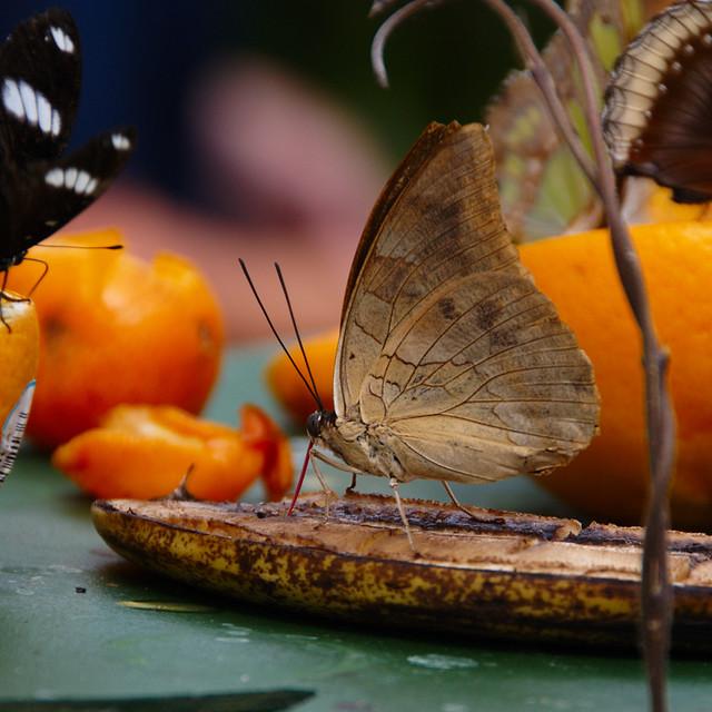 Butterflied Banana