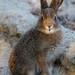 Crazy bunny, part I by markoknuutila