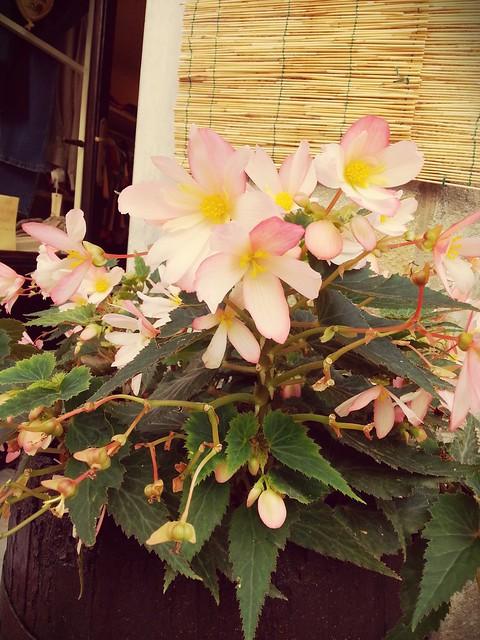 Non so che fiori sono