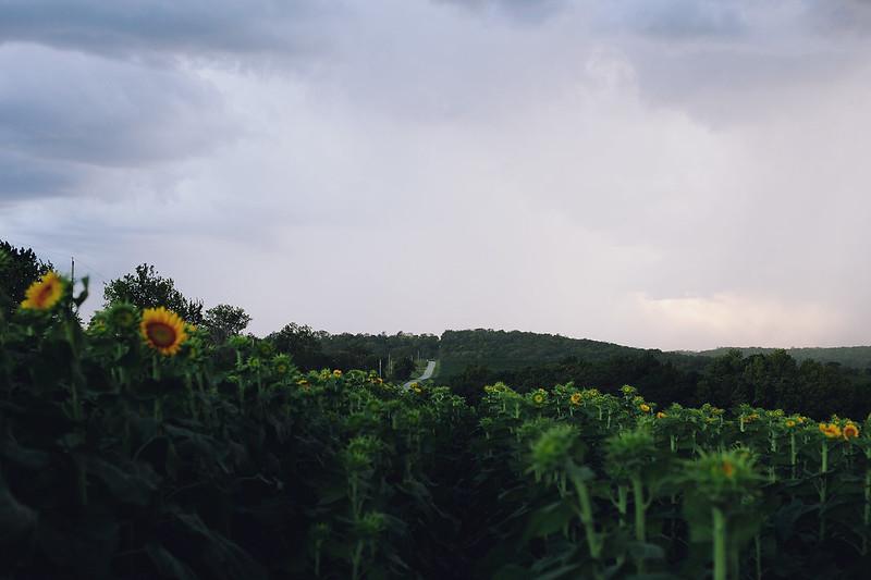 Kisiel-2014-08-29-0010