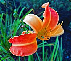 Flower, Toronto, ON