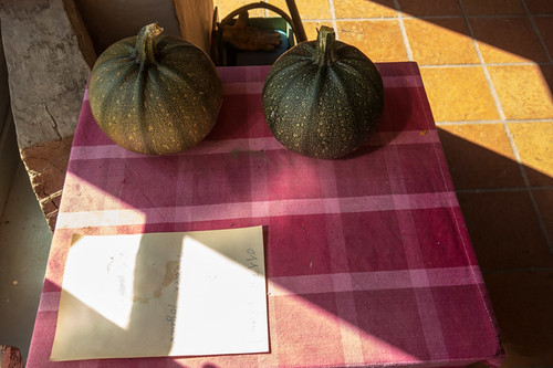 Took two courgettes for green pumpkins