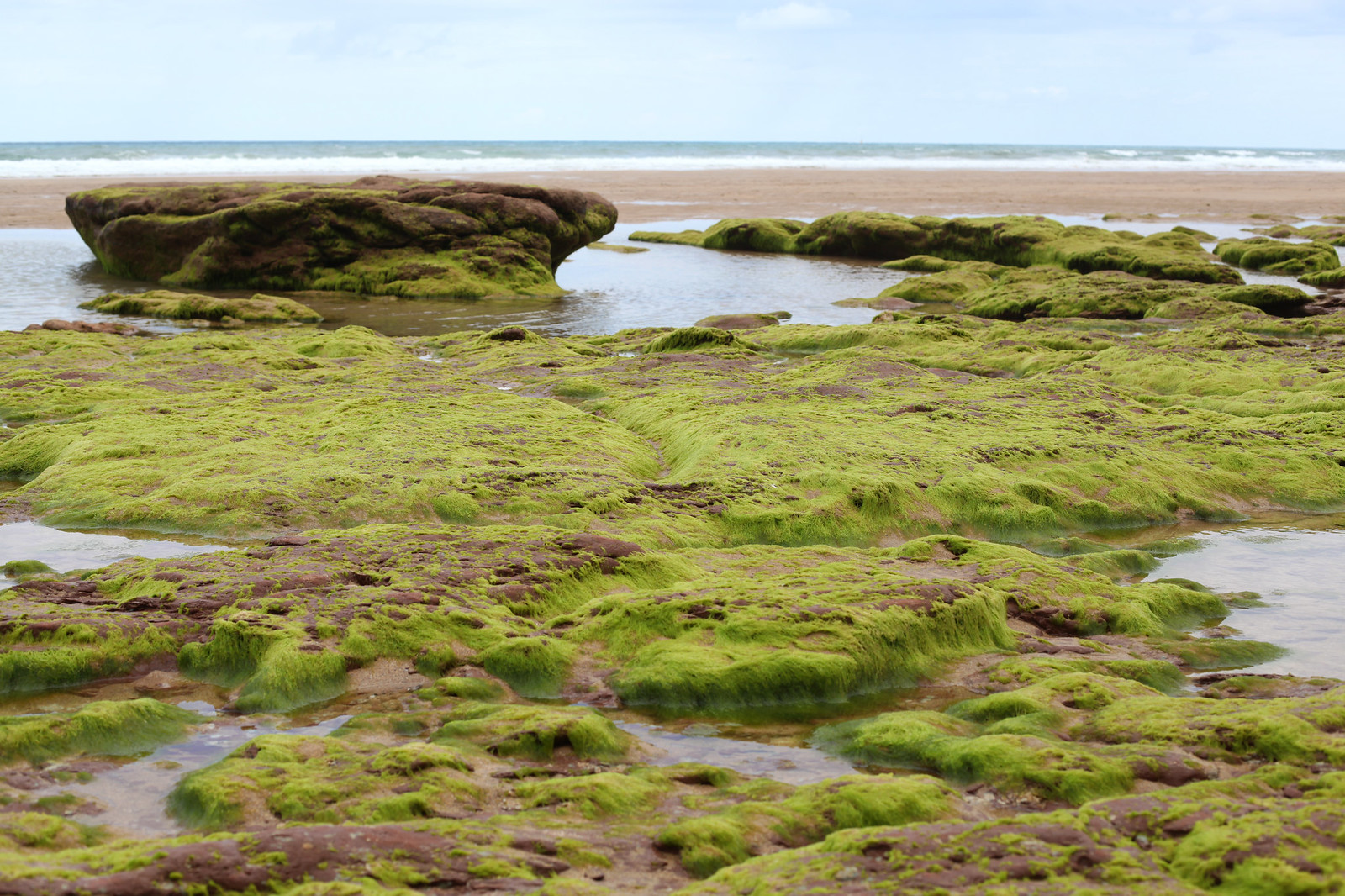 manlul_post_beach_moss_