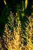 Web grasses