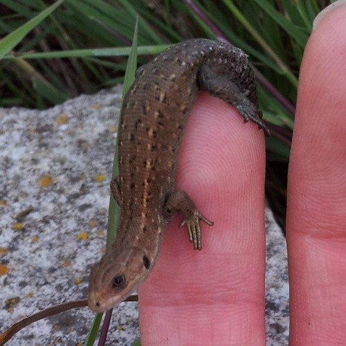 #Lizard #finger