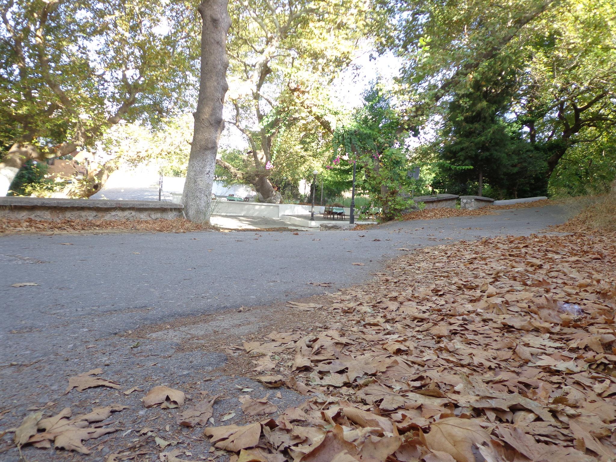 Ψίνθος Φθινόπωρο 2014 - Οι πρώτες μέρες.