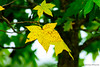 258:365 - 09/25/2014 - Fall Leaf