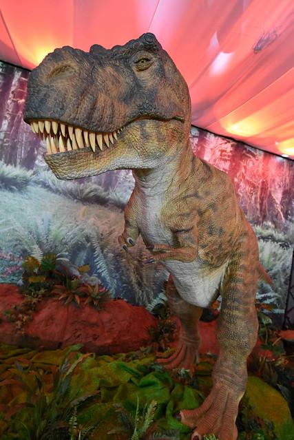 dinosaur D750 10