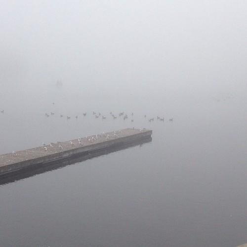 #ottawafog #hogsback #morningcommute #geese