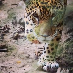 Amazon Animal Orphanage | Iquitos, Peru | #travel #Peru #rtw #travelgood #travelgram #igers #igtravel #instagood #instatravel #instapassport #WeRoam #wanderlust #wonderful_places #explore #backpack #animal #amazon #chasingtheworld
