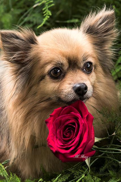 DSC_3492  _ Happy Valentine's Day !