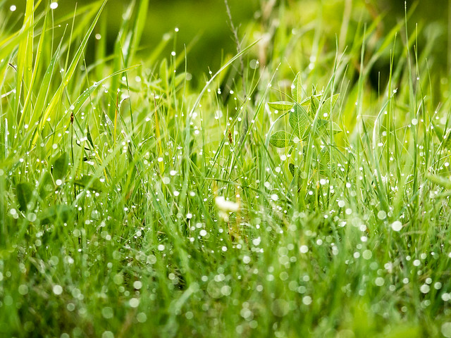 raindrops sparkling on grass