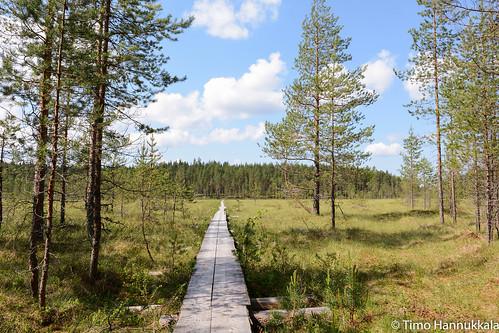 nature finland nikon fi walkingpath ruovesi siikaneva pirkanmaa d7100 soidensuojelualue