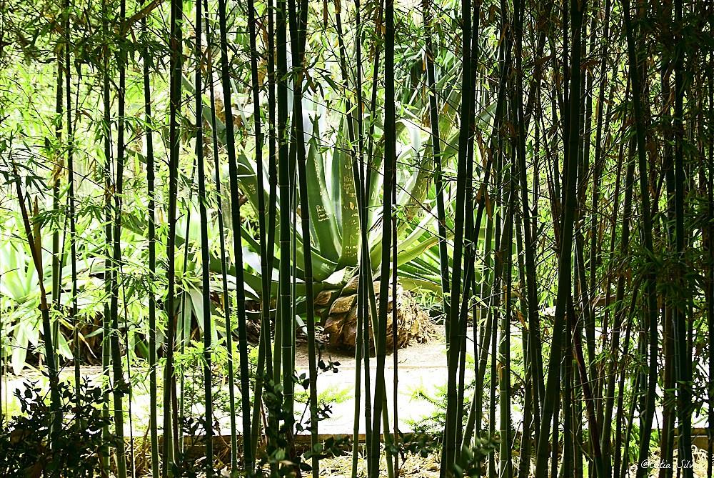 Jardin Botánico de Valencia (13)