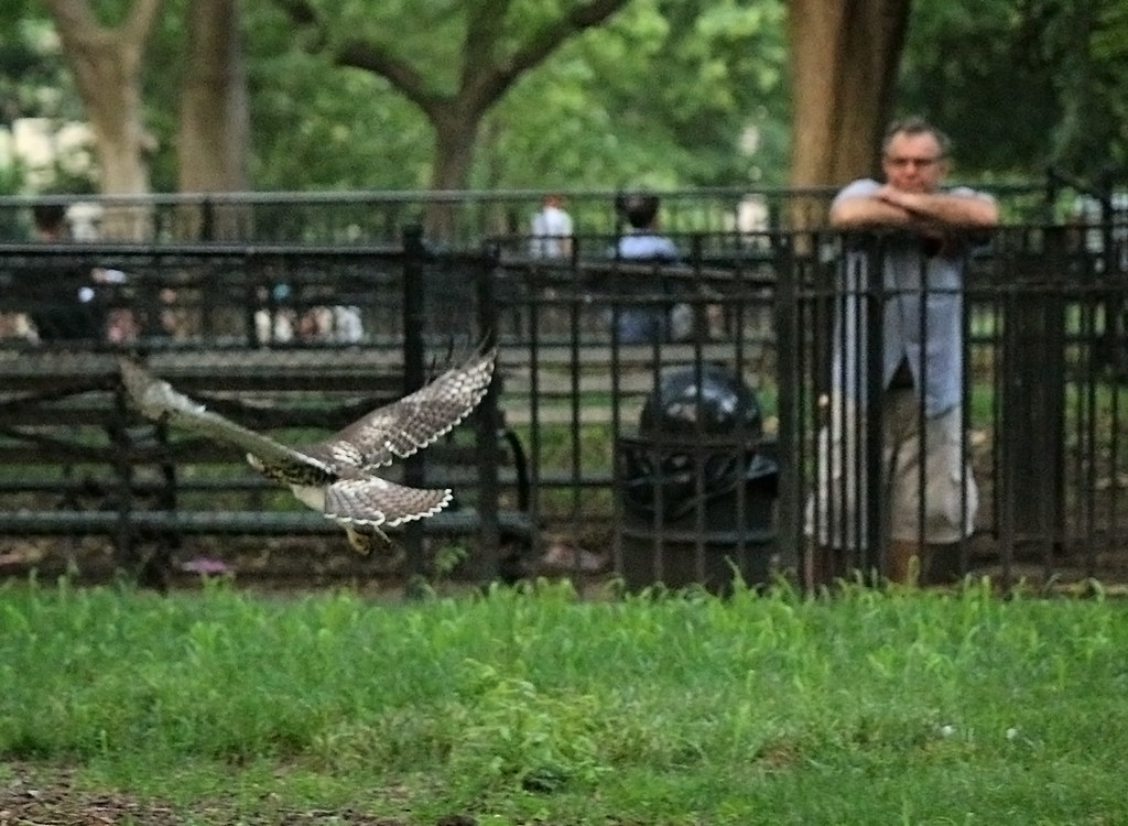Frolicking in Tompkins Square