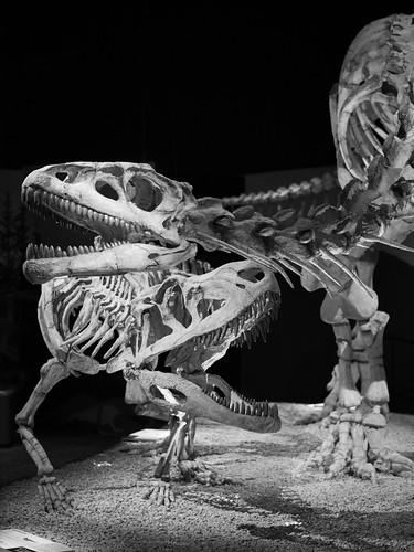 Lessemsaurus vs Fasolasuchus