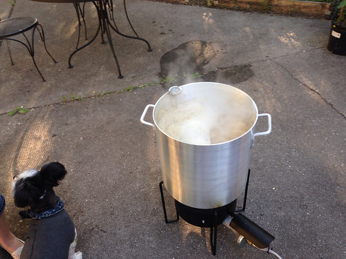 Our dog Barney, seated near the kettle of boiling wort