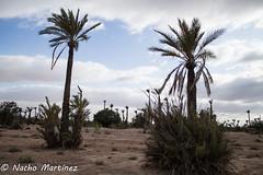 Jodido desierto