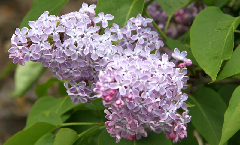 kukkiaaaaas