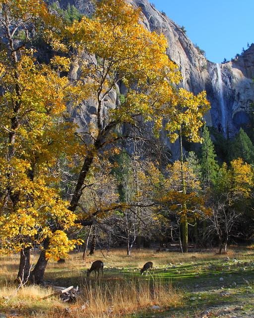 IMG_3977 Bridalveil Falls and Mule Deer, Yosemite National Park