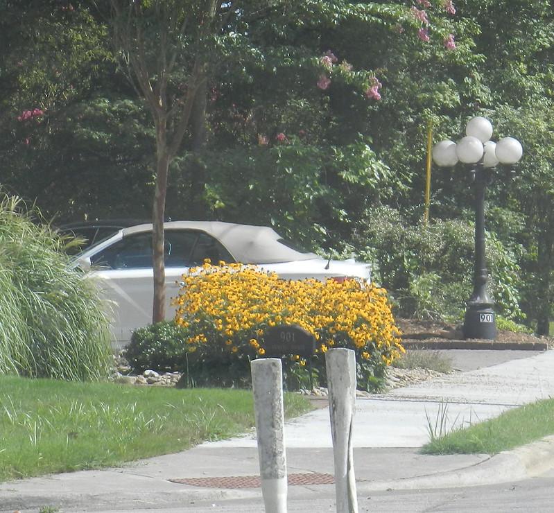 todaysflowersDSCN4293