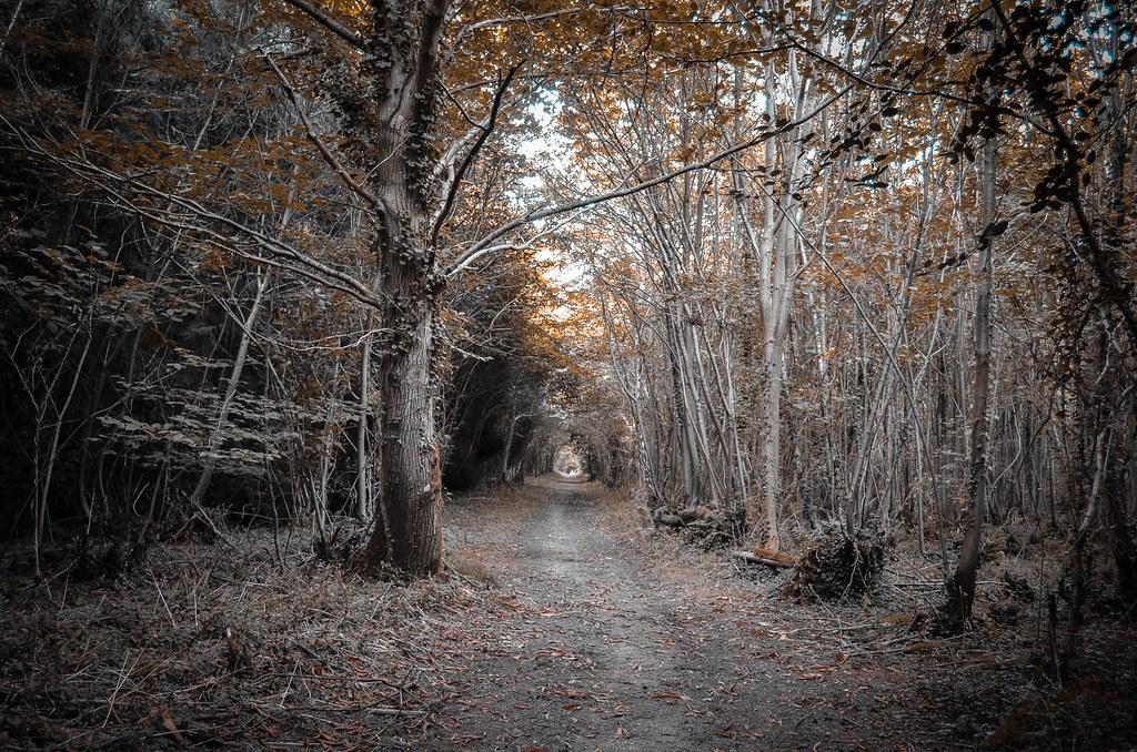 Goodwood Woods