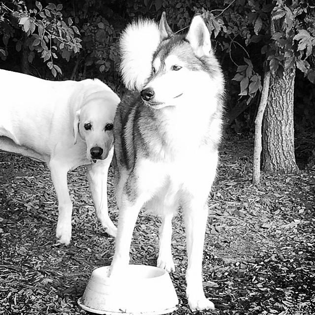 Daisy and Gir at the dog park - August 2014