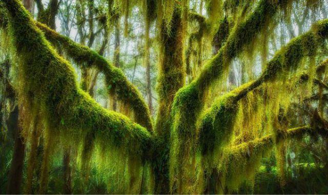 1_amazing-trees-7.jpg