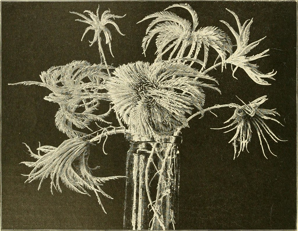 "Image from page 25 of ""The royal natural history"" (1893)"