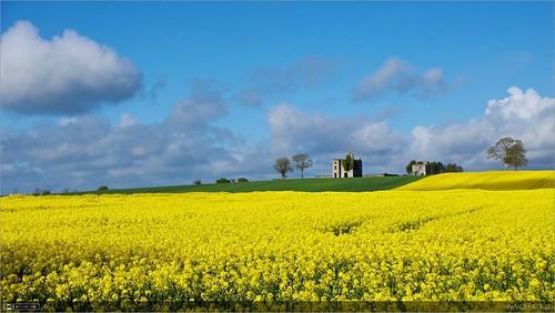 summer flower castle yellow ruin localhistory historicbuilding rathcoffeycastle rapebrassicanapus