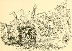 "Image from page 121 of ""Essex naturalist: being the journal of the Essex Field Club"" (1887)"