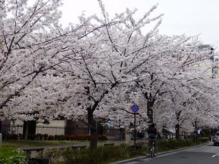 Kiyamachi Street