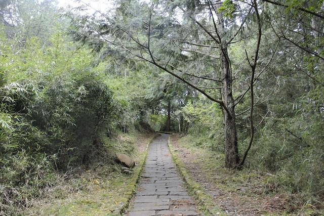 楠溪林道到塔塔加遊客中心的步道