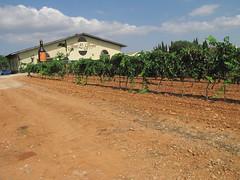 Mallorcan wine area