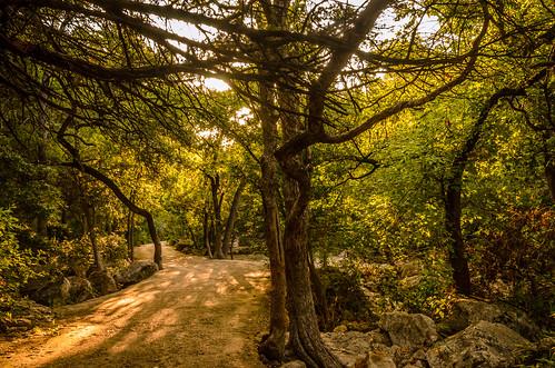 adobephotoshop austintexas adobelightroom trailsinaustin balcomescommunitypark