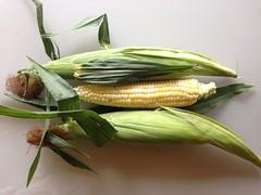 vegetable(0.0), flower(0.0), plant(0.0), dish(0.0), leek(0.0), herb(1.0), corn on the cob(1.0), produce(1.0), food(1.0), cuisine(1.0),