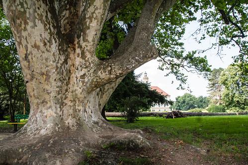 park tree castle walk croatia hrvatska drvo dvorac valpovo
