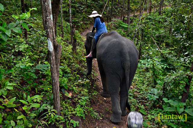 Riding an elephant through the forest