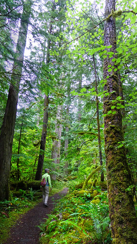walk in the woods Washington Cascades 2014_0124
