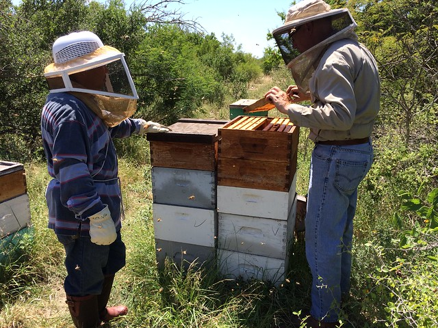 Comanche Creek bee yard Aug 2014