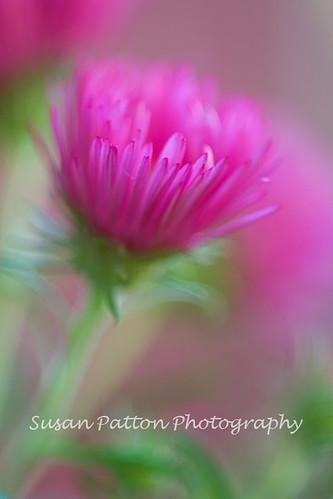 wpink_flower_1