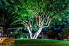 Lighted tree in Los Alcázares