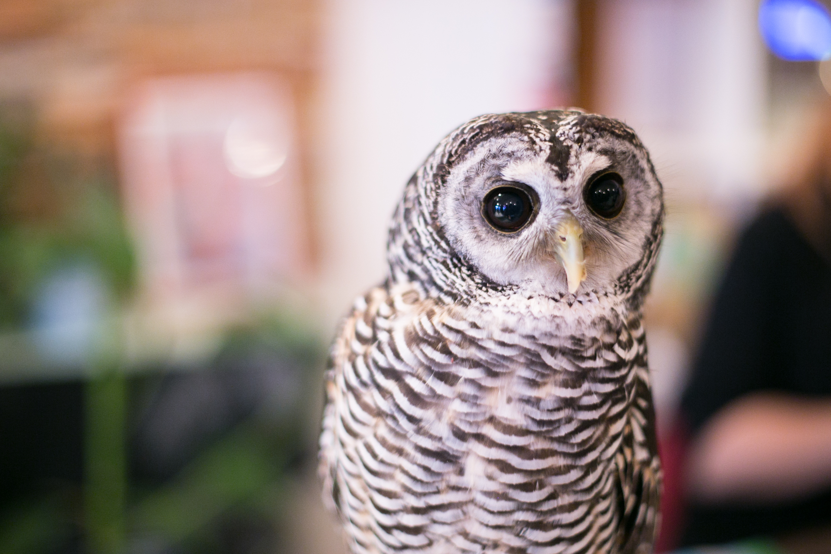 Osaka Owl Cafe