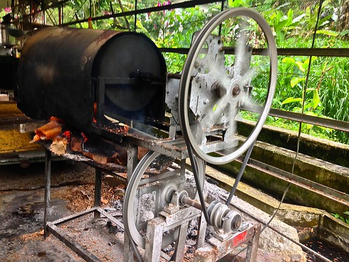 roasting fresh coffee in Minca