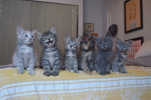 the itty bitty kitty committee best of the ibkc family portrait time