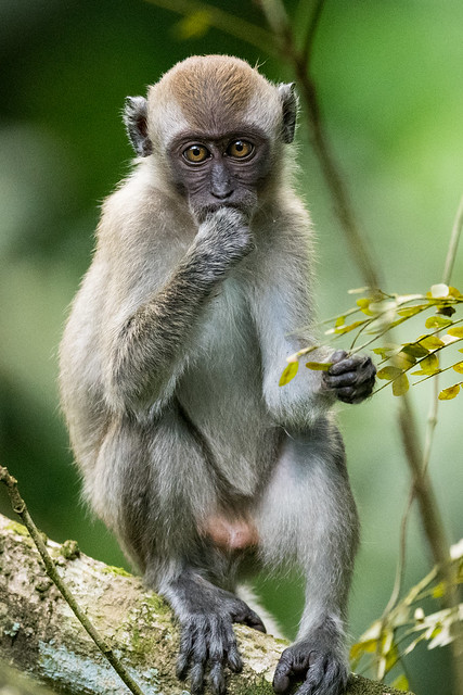 Monkey looking back