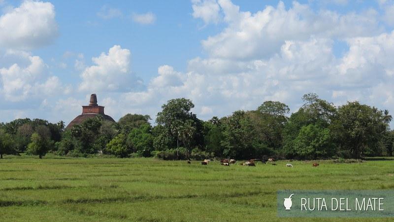 Anuradhapura Sri Lanka (5)