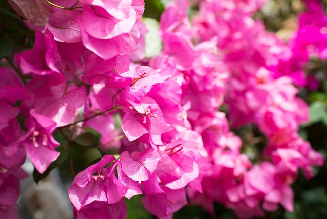 強羅公園の温室!色鮮やかな花を撮影