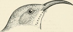 "Image from page 342 of ""Key to North American birds. Containing a concise account of every species of living and fossil bird at present known from the continent north of the Mexican and United States boundary, inclusive of Greenland and lower California,"